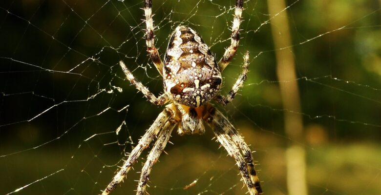 Tips voor het bestrijden van spinnen - diezeijn.nl