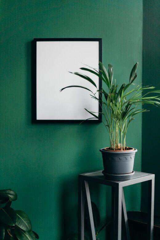 Groene muur met poster en plant