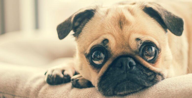 Hondenmand